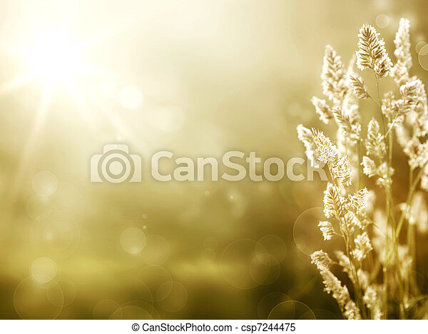 Art summer background. sunrise on the meadow - csp7244475