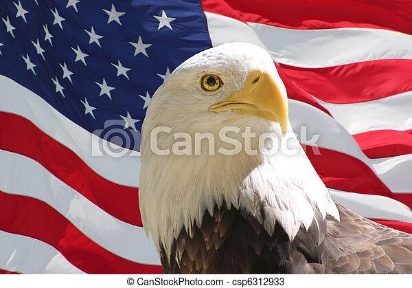 Bald Eagle and American Flag - csp6312933