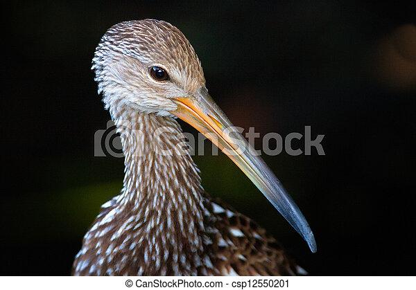 Bird with long beak or bill - csp12550201