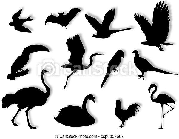 Birds silhouette - csp0857667