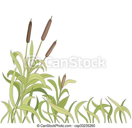 cartoon reeds background. vector - csp33235260