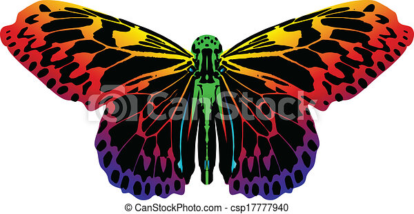 colorful butterfly isolated on white background - csp17777940