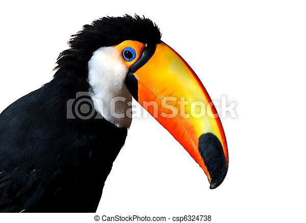 Colorful Caribbean Toucan with large orange beak - csp6324738