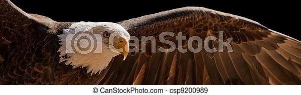 flying eagle - csp9200989