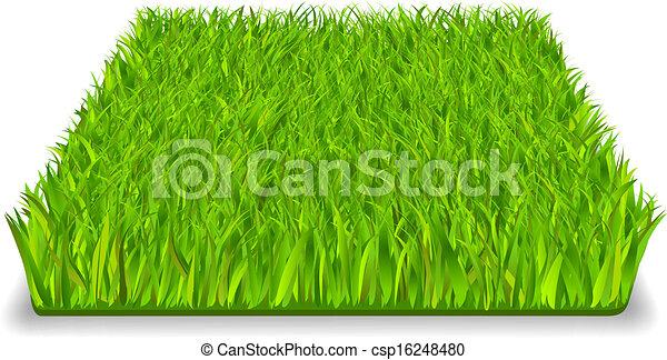 green grass - csp16248480