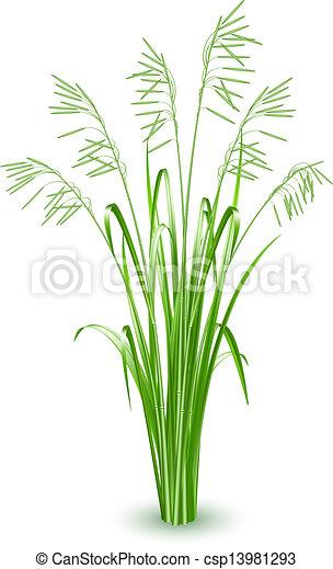 Green grass, vector - csp13981293