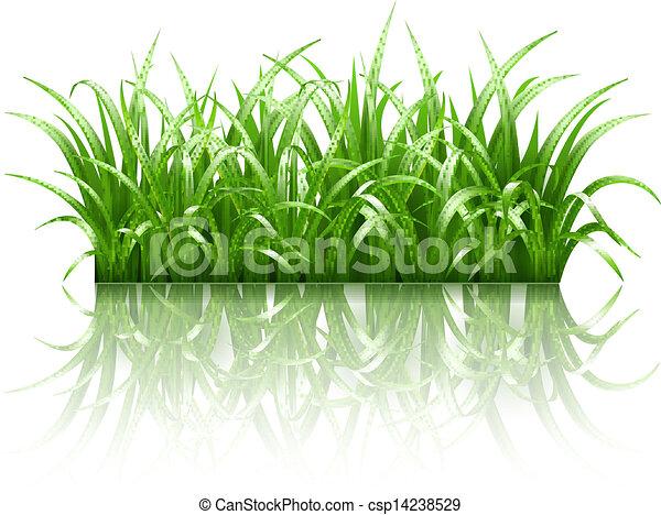 Green grass, vector - csp14238529