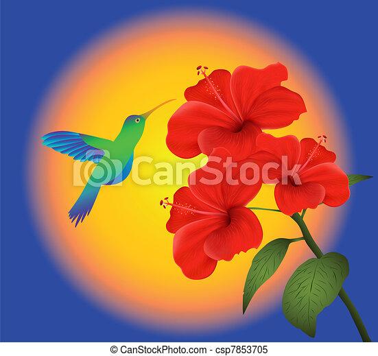 hibiscus and humming bird - csp7853705
