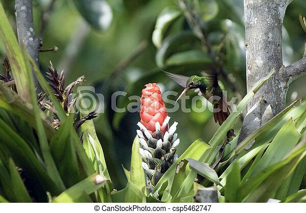 Humming Bird / Colibri - csp5462747