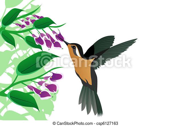 Humming-bird - csp6127163