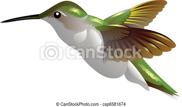 humming bird - csp6581674