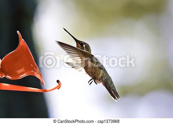 Humming Bird - csp1373968