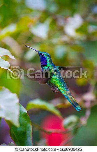Humming bird - csp6986425