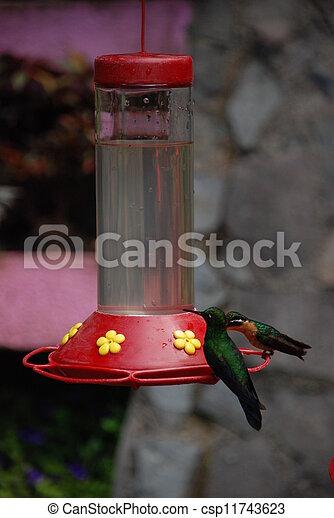 Humming bird - csp11743623