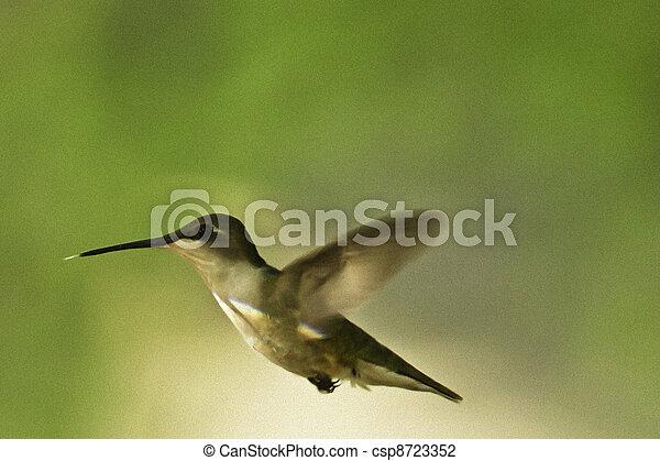 Humming Bird - csp8723352