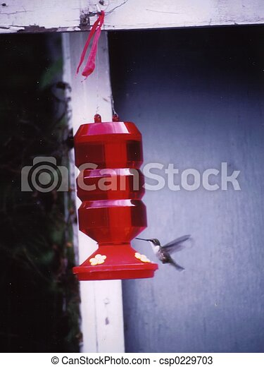 Humming bird - csp0229703