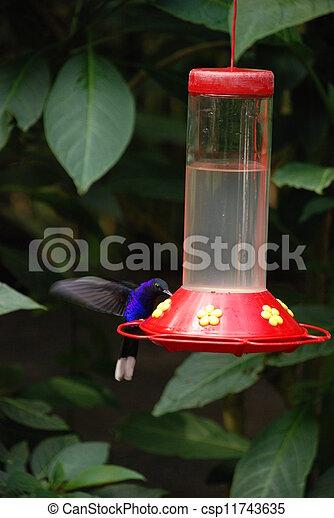 Humming bird - csp11743635