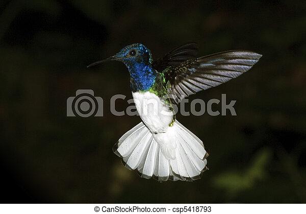 Humming Bird - csp5418793