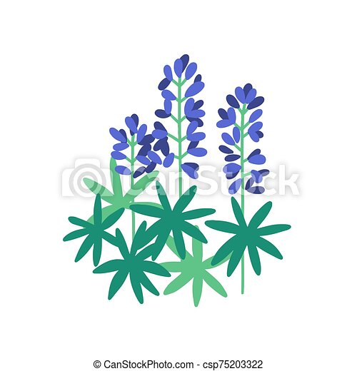 Lupine flat vector illustration. Purple meadow flowers isolated on white background. Flowering plants with petals and green leaves. Botanical items. Herbs, nature, flora. Blossoming wildflowers. - csp75203322