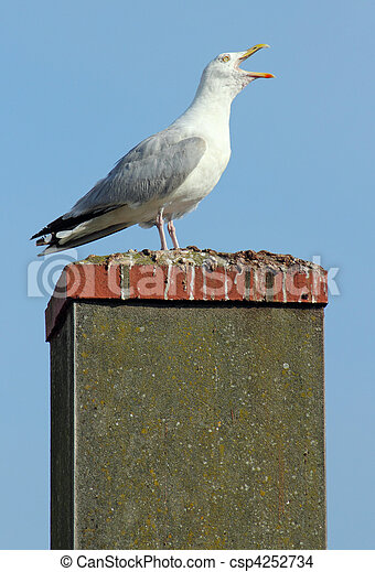 Noisy seagull with its beak wide open on a chimney. - csp4252734