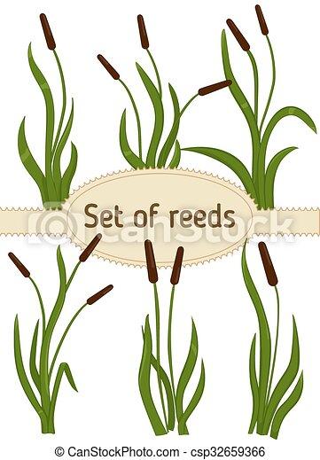 Reeds - csp32659366