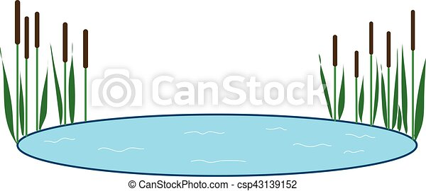 reeds - csp43139152