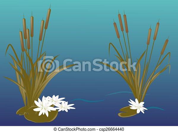 Reeds - csp26664440