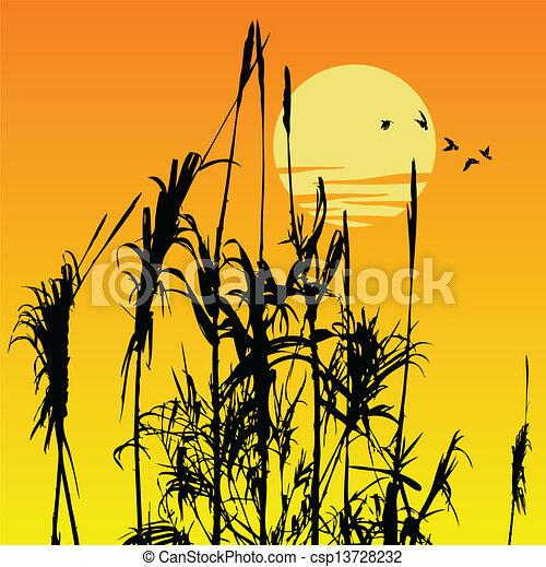 reeds - csp13728232
