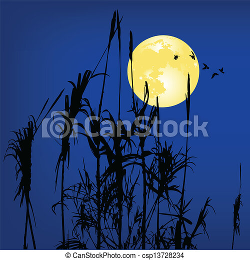 reeds - csp13728234
