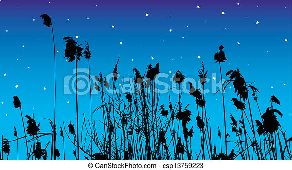 reeds - csp13759223