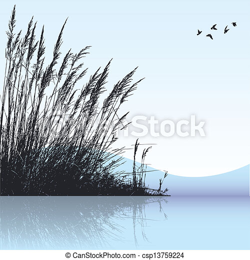 reeds - csp13759224