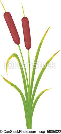 reeds - csp15805022