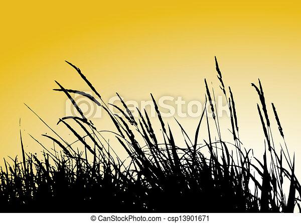 reeds - csp13901671