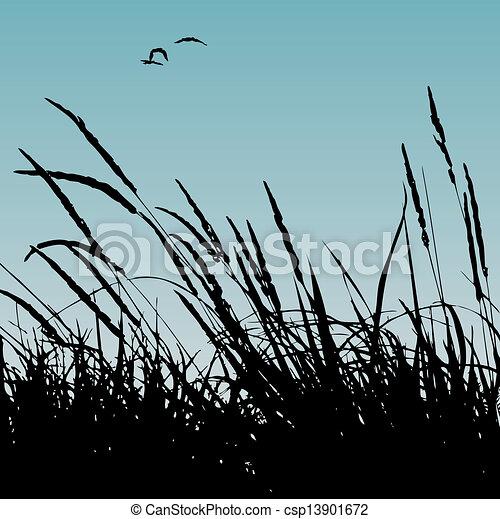 reeds - csp13901672