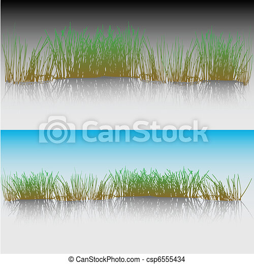 Reeds in a pond - csp6555434