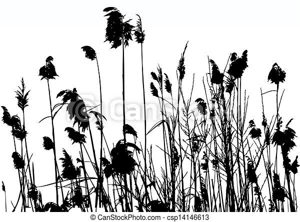 reeds - csp14146613