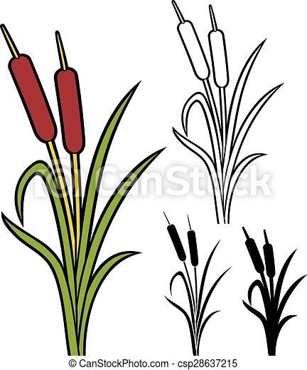 reeds - csp28637215
