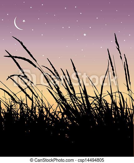 reeds - csp14494805