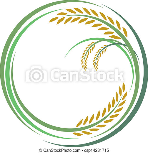 Rice design on white background - csp14231715
