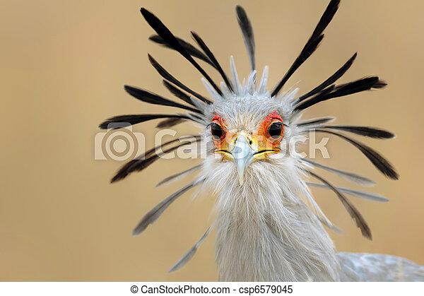Secretary bird portrait - csp6579045