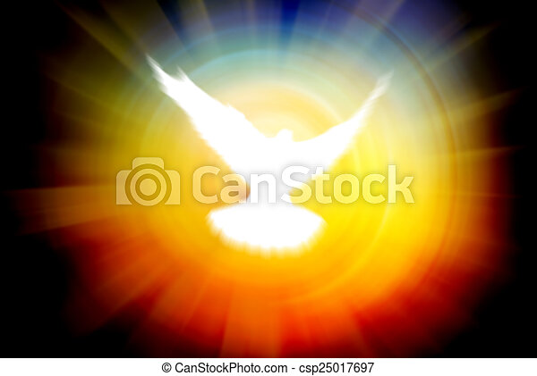 shining dove on a sun rays background - csp25017697