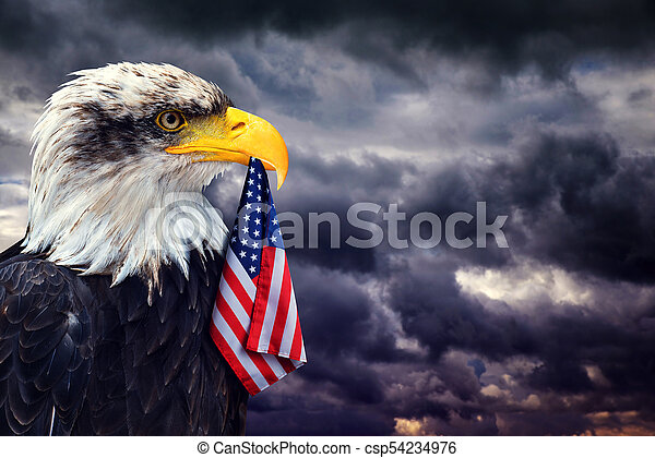 The Bald Eagle holds in the beak of the United States Flag - csp54234976