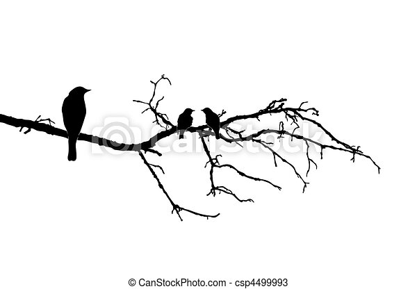 vector silhouette of the birds on branch - csp4499993