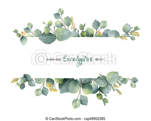 Watercolor vector green floral banner with silver dollar eucalyptus leaves and branches isolated on white background. - csp49952385